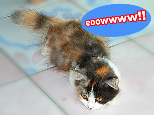 darah-kucing-new.jpg