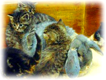 rabit-kucing-hug.jpg